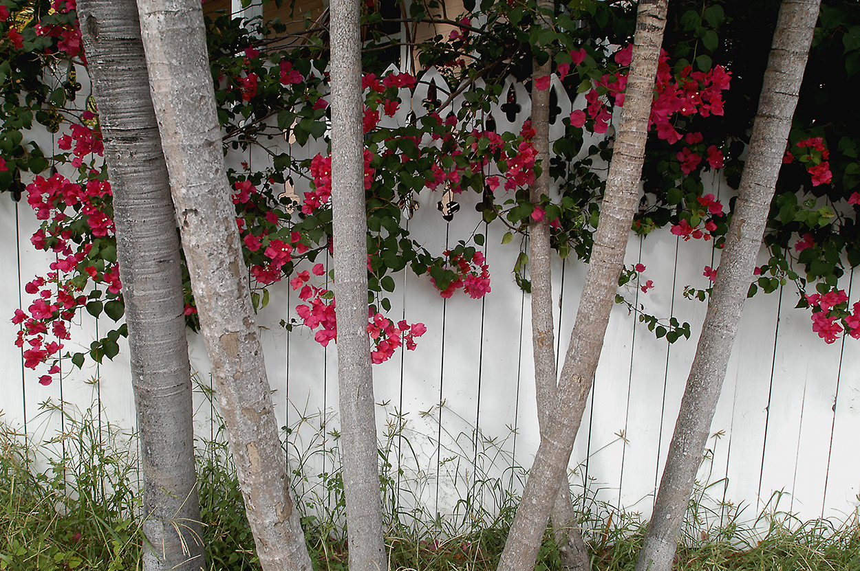 Key-West-flowers-on-fence